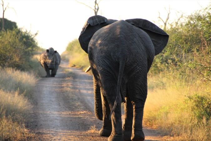 An elephant and white rhino in Hlane Royal National Park in Eswatini
