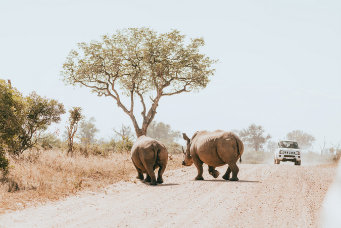 Two rhinos in South Africa