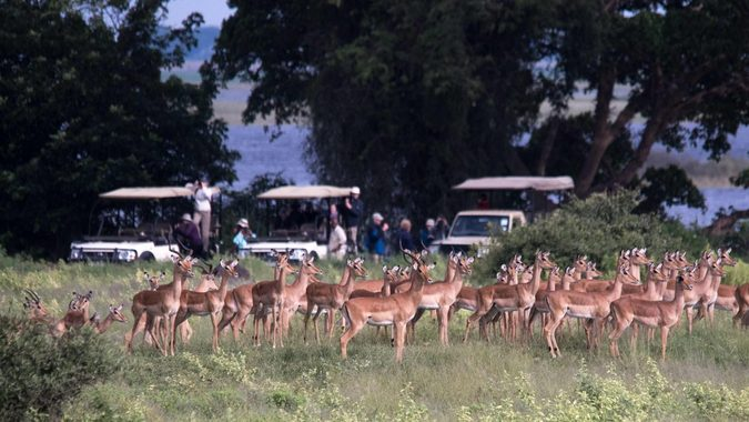 Wildlife with game viewing vehicles