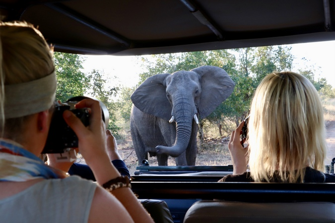 Watching an elephant from game drive vehicle