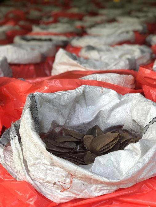 The seizure included 11.9 tonnes ofgiant pangolin scales