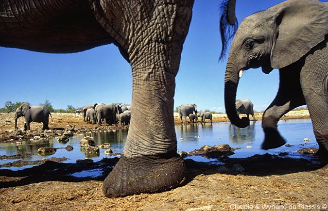 Elephants up close in Etosha National Park, Namibia