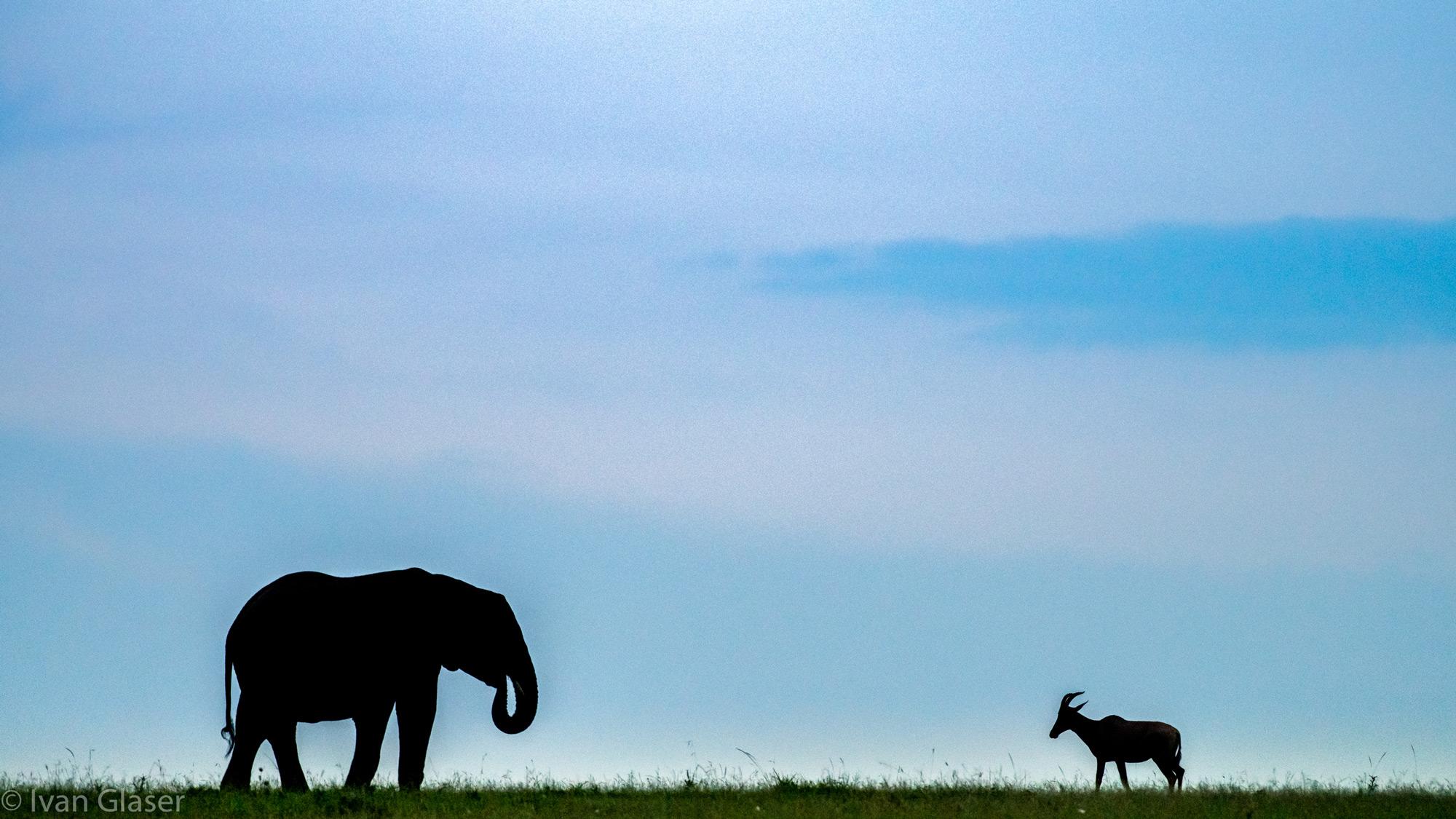 An elephant and topi in Maasai Mara