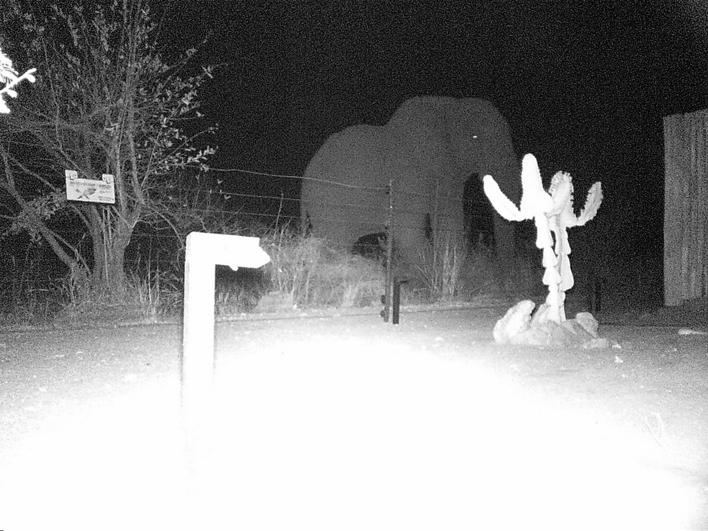 Camera trap showing an elephant at night