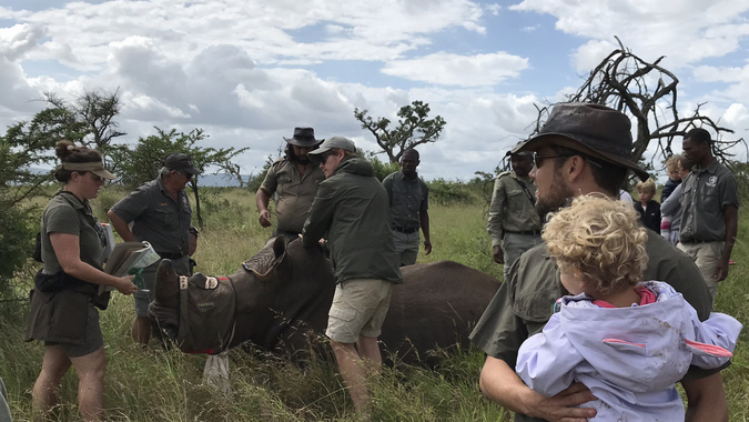 Rhino dehorning exercise