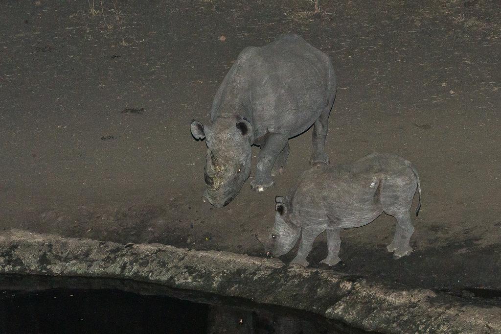 Black rhino and calf at waterhole