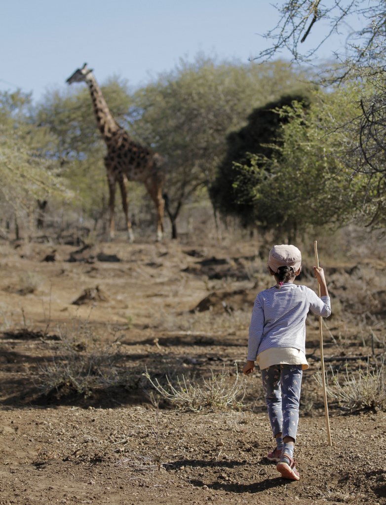 Young girl watching a giraffe in Tanzania