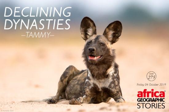 Declining Dynasties – Tammy