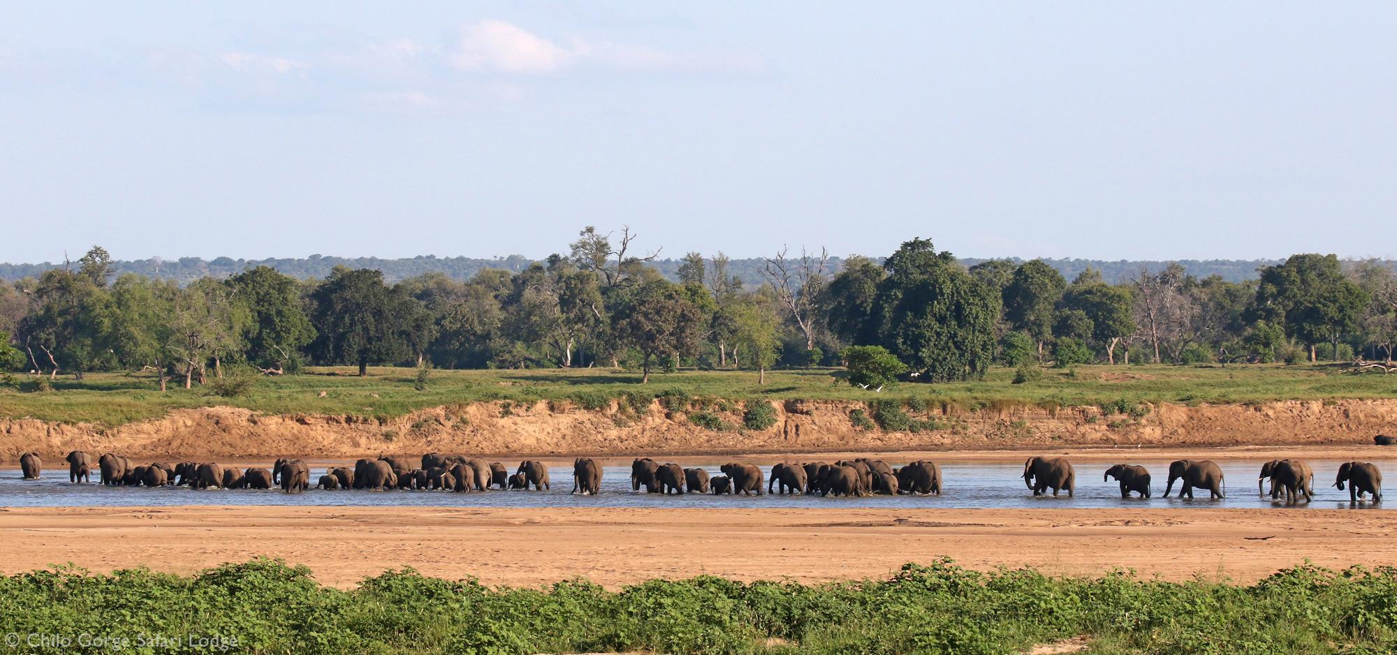 Large herd of elephant in Gonarezhou National Park, Zimbabwe
