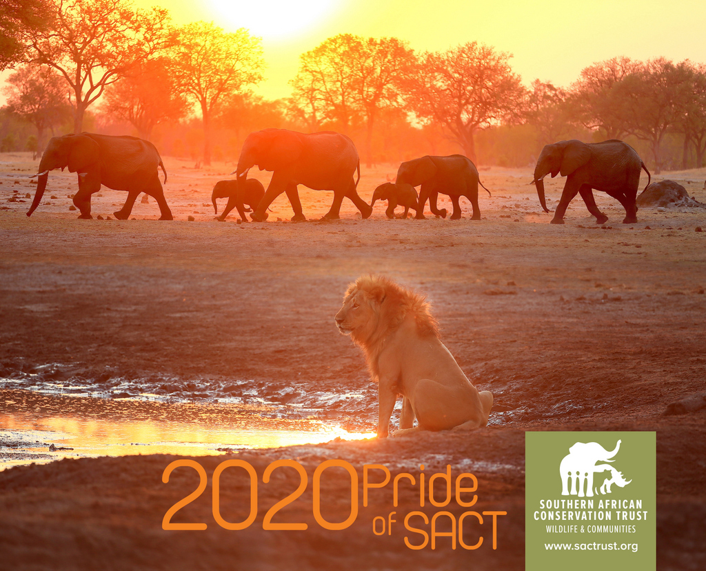 Cover of the 2020 wall calendar, lion and elephants