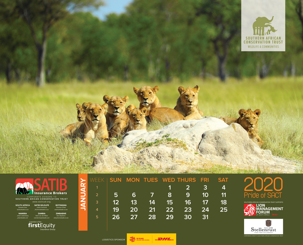 The month of January in the 2020 wall calendar, lions