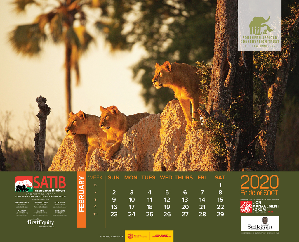 The month of February in the 2020 wall calendar, lions