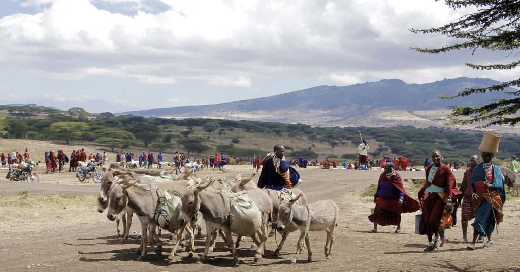 The sheep and goat market at Monduli Juu in Tanzania