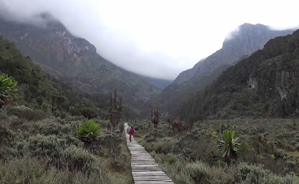 Hiking through the Rwenzori Mountains