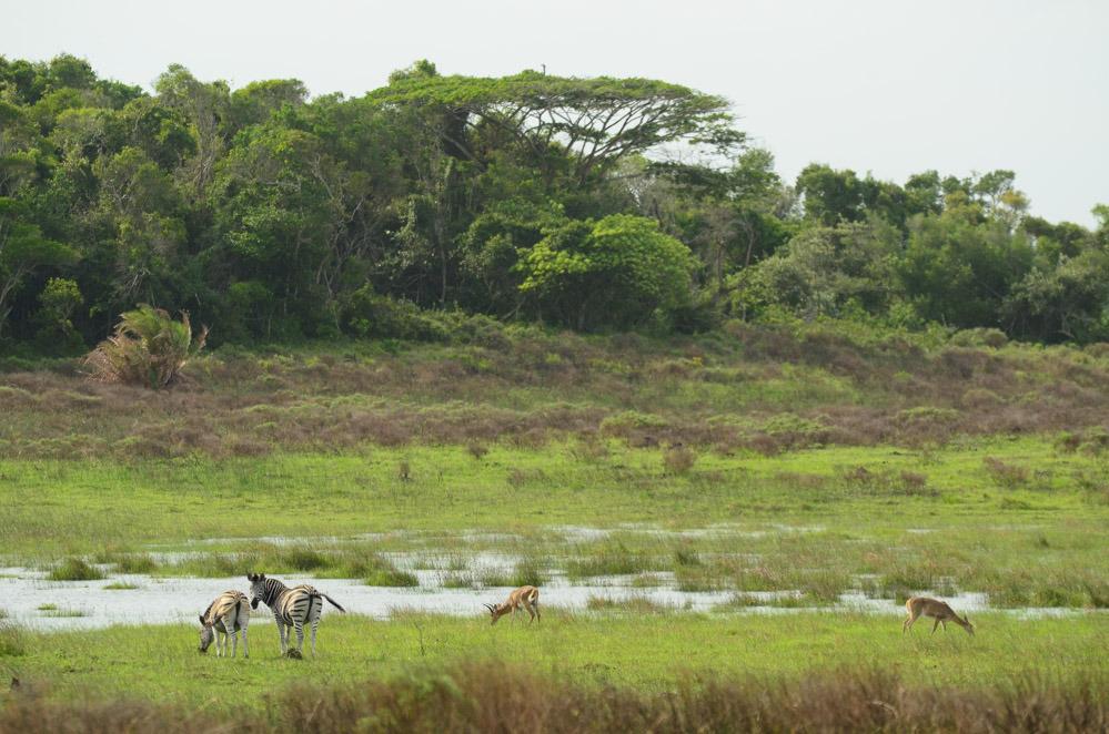 Wildlife spotted in iSimangaliso Wetland Park
