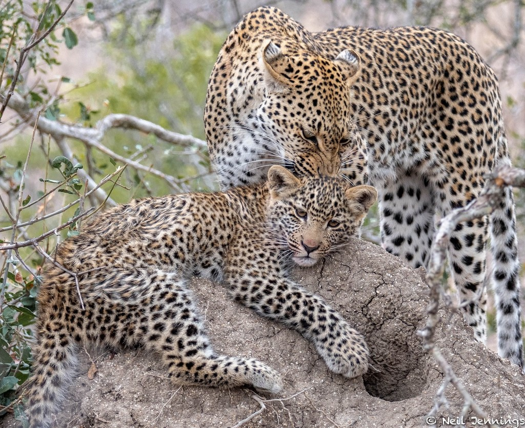 Spring highlights from the Greater Kruger - Africa Geographic