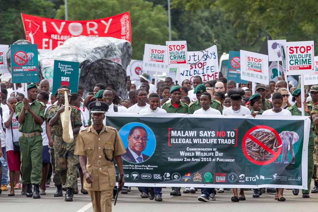 Demonstration against illegal wildlife trade in Malawi