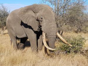 Elephants and trees