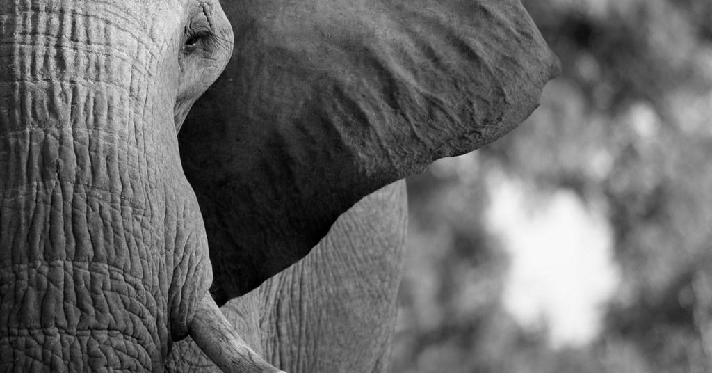 stock image of elephant
