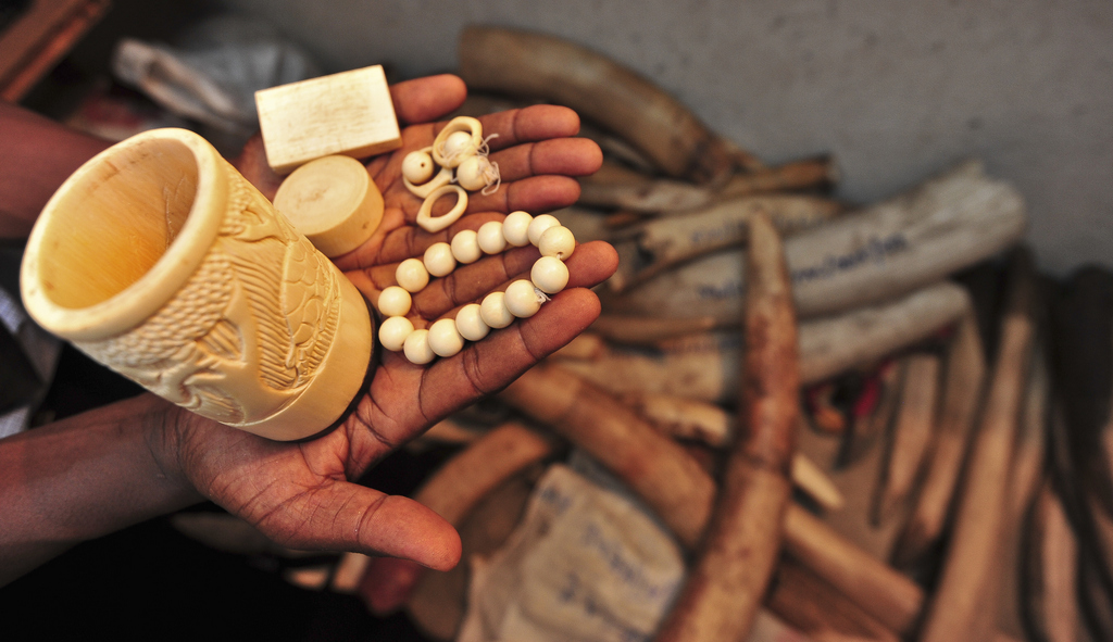 Ivory pieces recovered from poachers in Malawi