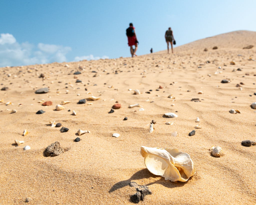 Seashells on a sand dune in Mozambique