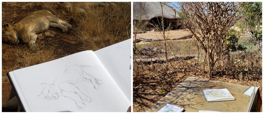 Two images of a sleeping lion cub being sketched and art books on a table by a lodge in Greater Kruger, South Africa