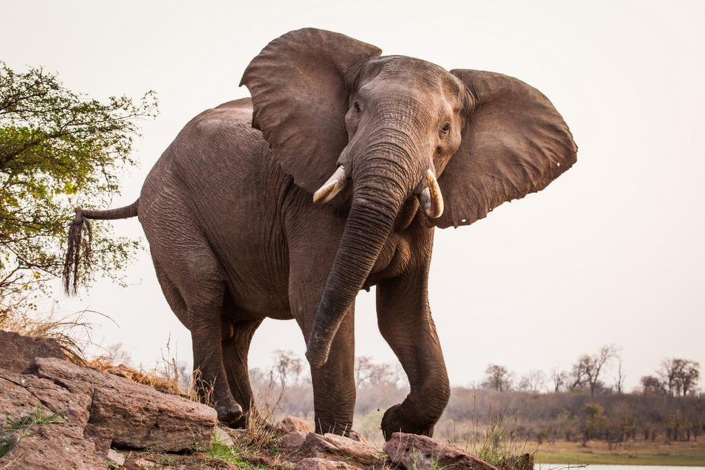 Elephant in Matusadonha National Park, Zimbabwe