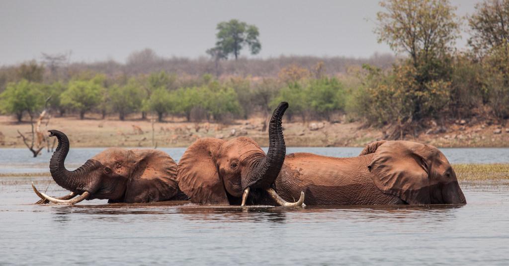 Three elephants in lake in Matusadonha National Park, Zimbabwe