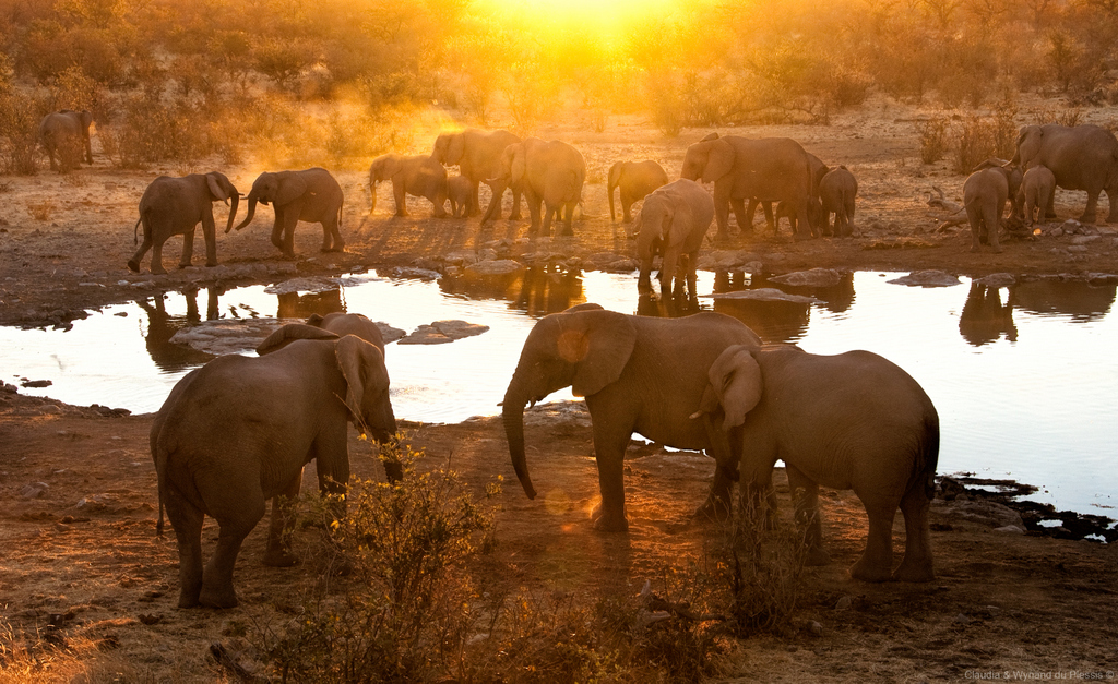 Elephant herd at a waterhole in Etosha, Namibia