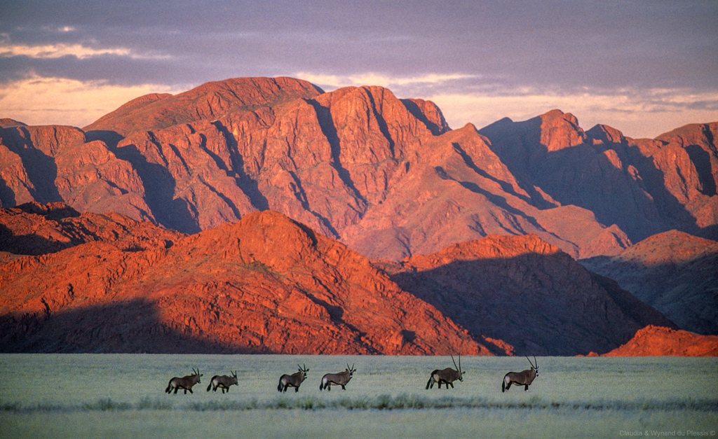 Herd of gemsbok at the Naukluft Mountains, Namibia