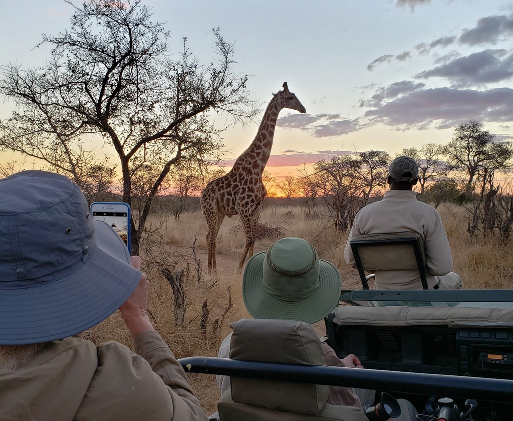 Guests watching a giraffe on a game drive in Greater Kruger, South Africa