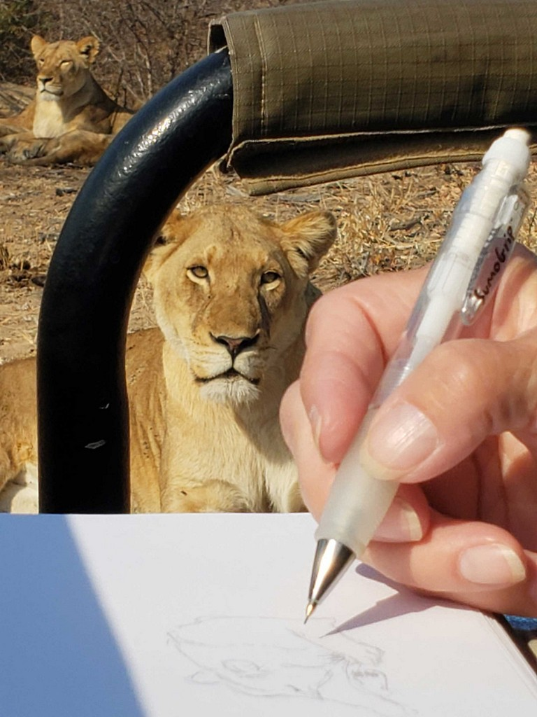 Sketching a lion on an art safari in Greater Kruger, South Africa