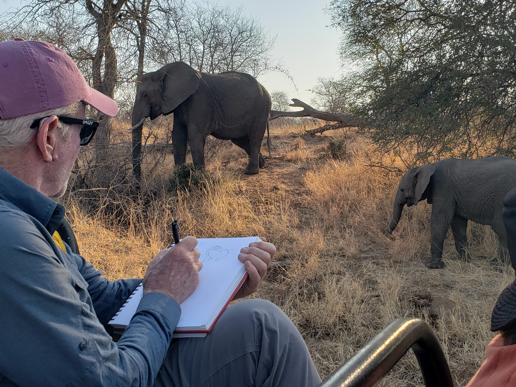 Sketching elephants while on safari in Greater Kruger, South Africa