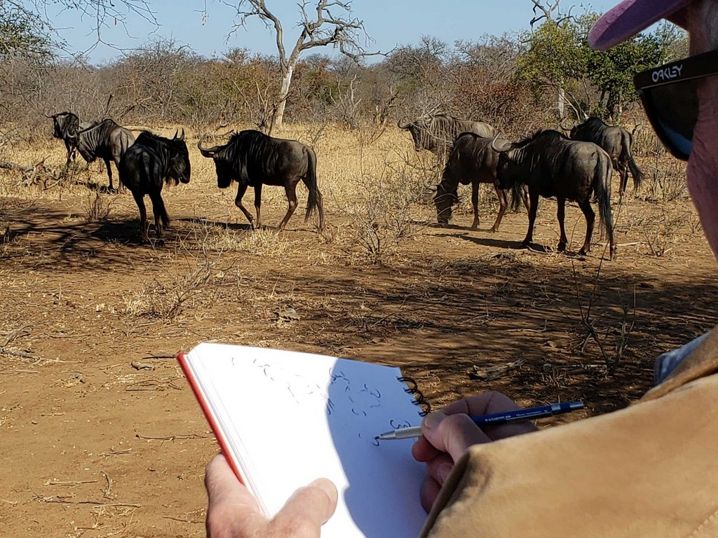 Guest sketching a herd of wildebeest in Greater Kruger, South Africa
