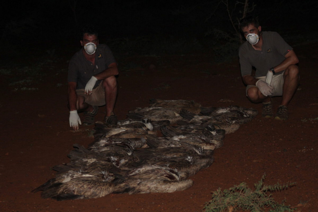 Wildlife ACT response team with the bodies of 13 white-backed vultures