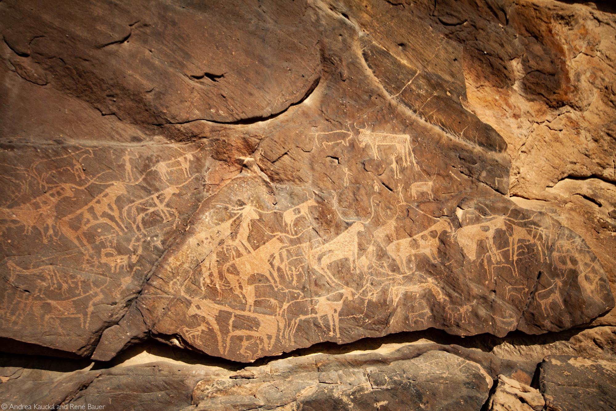 Pertroglyphs at Bir Nurayet of longhorn cattle, Sudan © Andrea Kaucká and René Bauer
