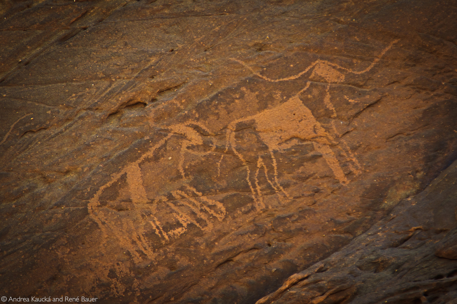 Petroglyphs of longhorn cattle and pastoralists speak of the ancient tradition of raising cattle © Andrea Kaucká and René Bauer