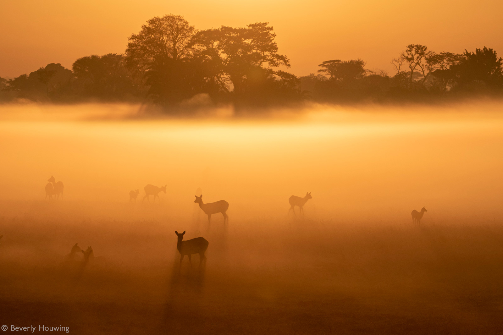 An early morning mist covers the grassland in the Busanga Plains where puku and lechwe rest and graze. Kafue National Park, Zambia © Beverly Houwing