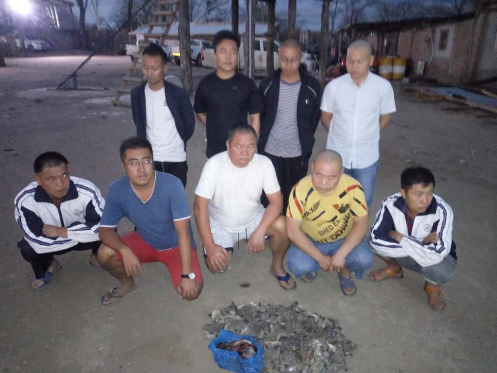 Chinese nationals with pangolin scales, poaching