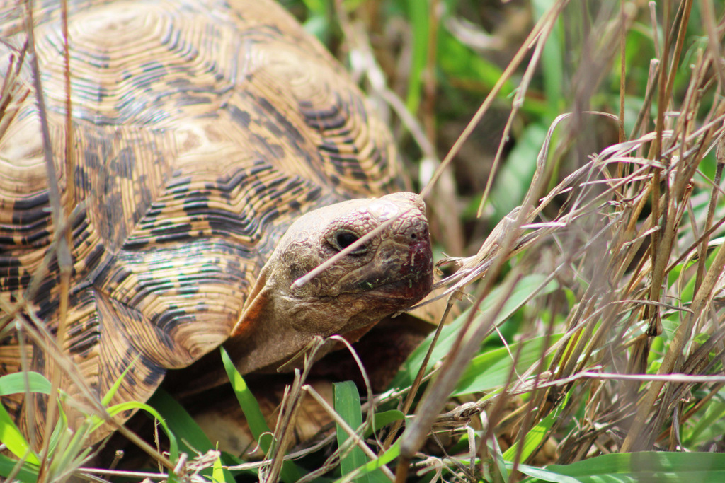 A tortoise in the wild