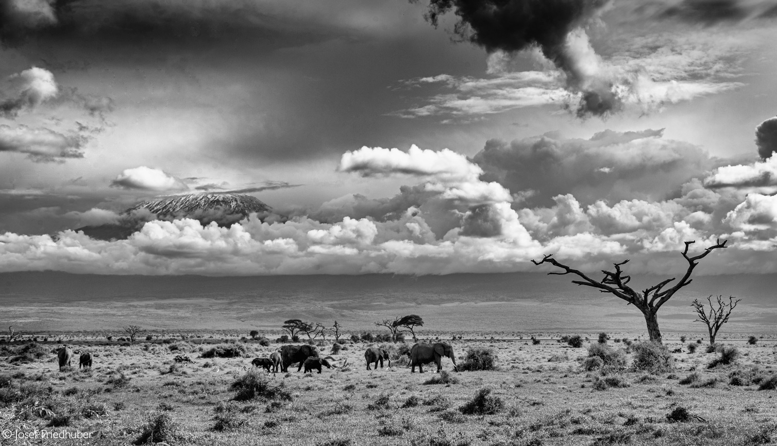 An elephant family herd pass by with Mount Kilamanjaro in the background. Amboseli National Park, Kenya © Josef Friedhuber