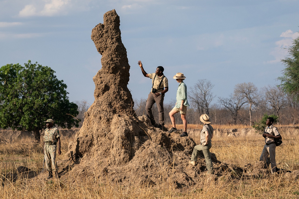Guide showing guests large termite mound in South Luangwa National Park in Zambia