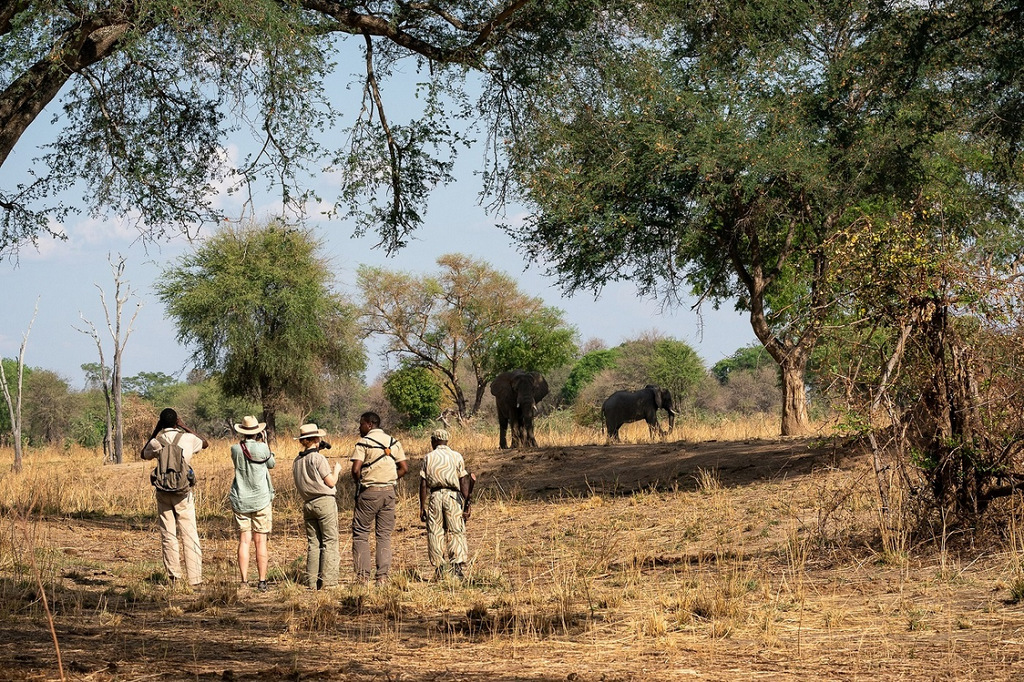 Guests on walking safari watching elephants in South Luangwa National Park in Zambia
