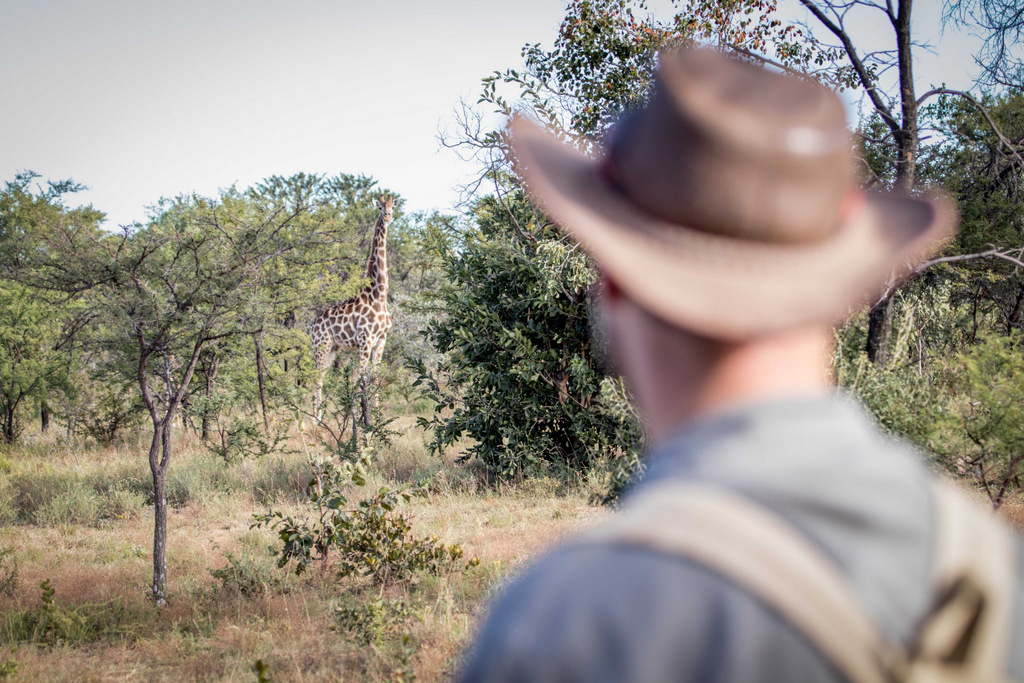Person observing a giraffe while on foot