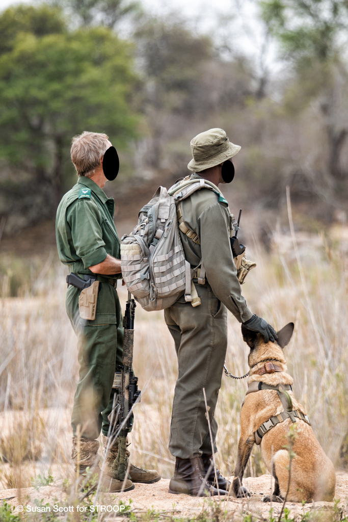 Special Rangers inside the Kruger National Park, anti-poaching and dog