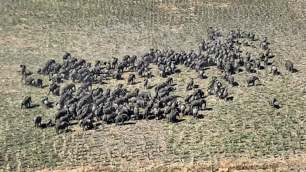 A large herd of elephants seen moving across the savannah close to Rann in Borno State, Nigeria