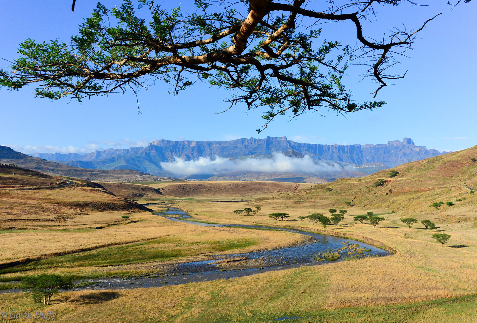 View of the Drakensburg Amphitheatre. Royal Natal National Park, South Africa © Gavin Duffy