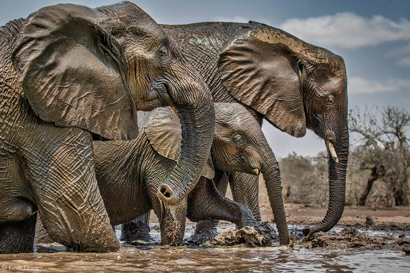 An elephant family herd at a waterhole. Mashatu Game Reserve, Botswana © Kevin Dooley