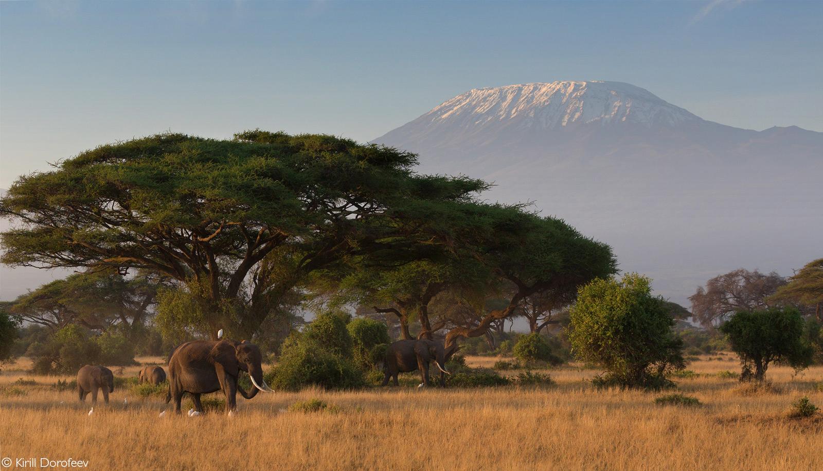 Elephants and Mount Kilimanjaro. Amboseli National Park, Kenya © Kirill Dorofeev