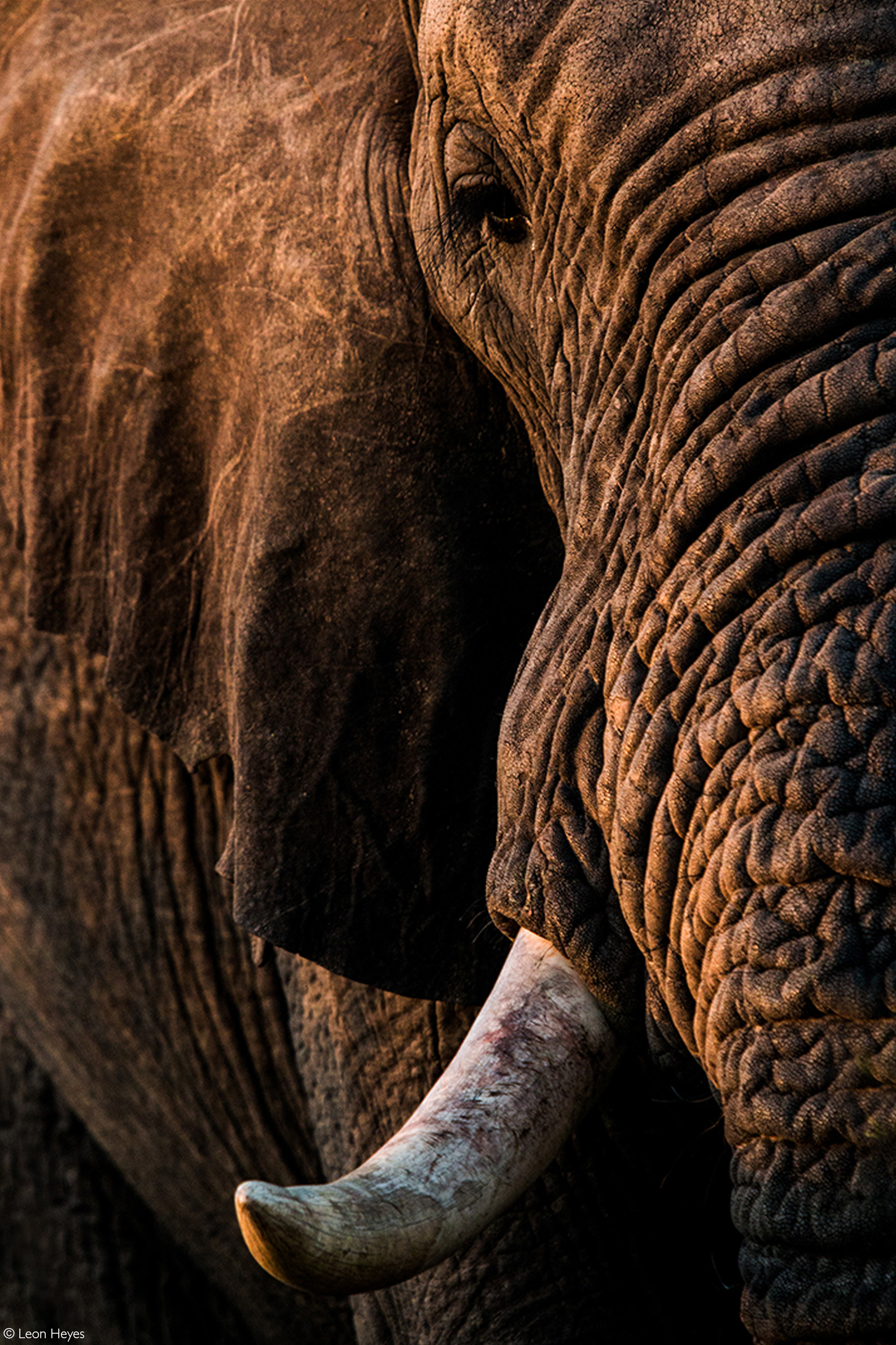 Up close and personal with an elephant. Addo Elephant National Park, South Africa © Leon Heyes